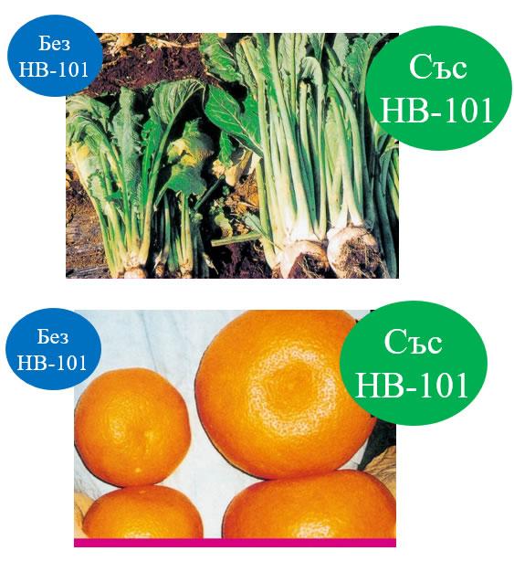 Произвеждат се по-големи зеленчуци и плодове.